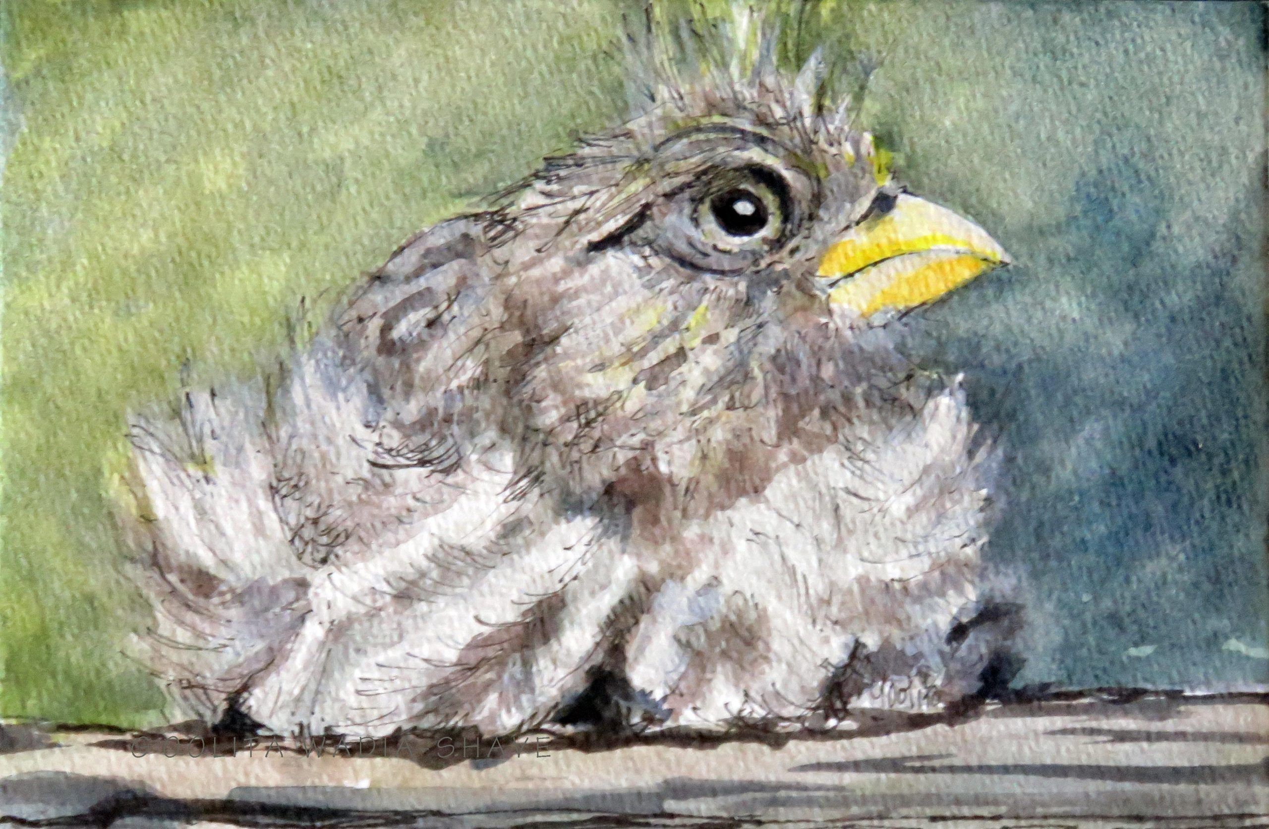 "Victoria BC (Series) Backyard visitors 4""x 6"" Original Watercolour on watercolour paper NFS"